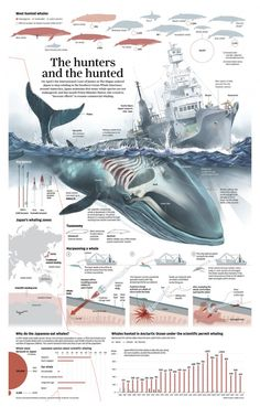 Futuristic Architecture Discover Whale Poaching in Japan [Infographic] Whale Hunting in Japan Infographic. Information Visualization, Data Visualization, Motifs Animal, Newspaper Design, Wale, Marine Biology, Information Graphics, Futuristic Architecture, Sea World