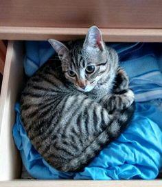 Gatito comodo