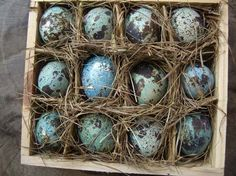~ natural hallowed quail eggs from Rural Country Diaries on Etsy