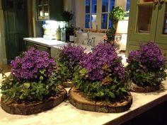 purple succulents wedding - Google Search