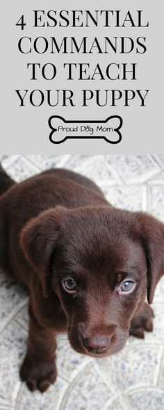 4 Essential Commands To Teach Your Puppy   Puppy Training Tips   Dog Training Tips