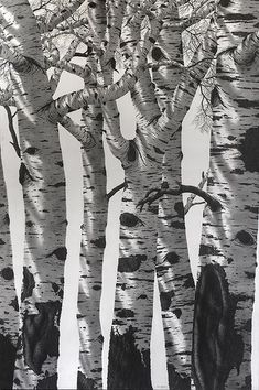Pin by Tim Irvin on Pencil Drawing of Trees | Pinterest