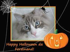 Happy #Halloween a tutti gli a-mici! #cat