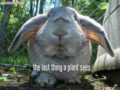 for Layla its every plant she can get her mouth on Baby Bunnies, Funny Bunnies, Bunny Rabbits, Cute Bunny, Easter Bunny, Rabbit Photos, Funny Cute, The Funny, Hilarious