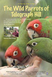 The Wild Parrots of Telegraph Hill (2003) - IMDb Directed by Judy Irving