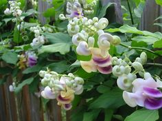 Blog Multiflora