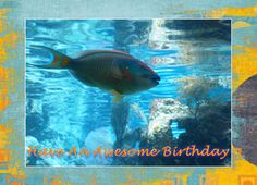 Birthday Tropical Fish Greeting Card
