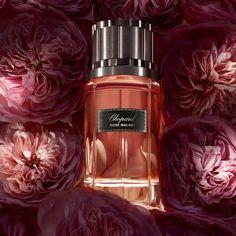 Chopard Rose Malaki (2014) {New Perfume} http://www.mimifroufrou.com/scentedsalamander/2014/07/chopard_rose_malaki_2014_new_p.html