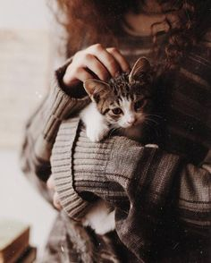 Image in Mein Stil collection by 2018 on We Heart It - Find images and videos on We Heart It – the app to get lost in what you love. Kittens Cutest, Cats And Kittens, Cute Cats, Animals And Pets, Baby Animals, Cute Animals, Son Chat, Cat Photography, Tier Fotos