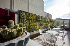 Gärtnern Dachbalkon-Dachterrasse grüne Wand