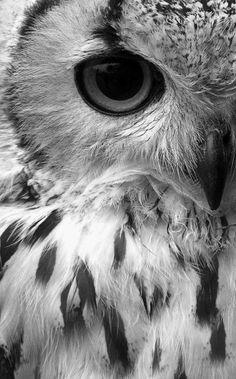 owl eule | Tumblr