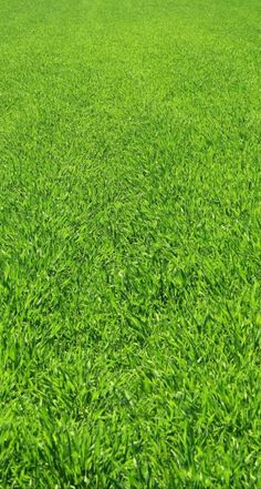 (744×1392) Ios 7, Iphone Wallpapers, Grass, Grasses, Iphone Backgrounds, Herb, Lawn
