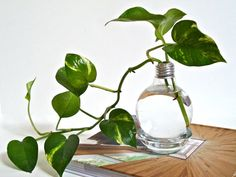 Hey, I found this really awesome Etsy listing at https://www.etsy.com/listing/77992819/lightbulb-vase-with-clear-base-light