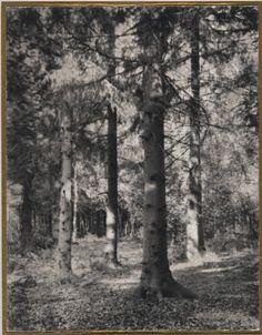 Redlands Woods Philadelphia Museum of Art Accession Number: 1968-220-21