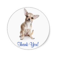 Thank You Smiling Chihuahua  Sticker