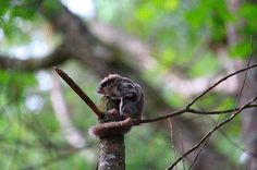Photos - Michael G. Brown, flying squirrel
