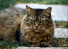 The cat =^..^= - http://www.1pic4u.com/blog/2014/09/20/the-cat-3/