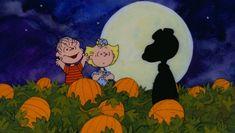 Zooming Zacks Horrid Halloween Haunt