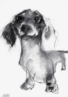 Dachshund - friendly and curious dog art рисунки, рисунок со Animals And Pets, Cute Animals, Dachshund Art, Daschund, Dachshund Drawing, Dachshund Tattoo, Charcoal Sketch, Charcoal Drawing, Weenie Dogs