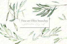 Olive branches. Watercolor clipart. by LABFcreations on @creativemarket