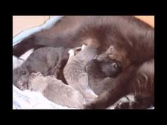 Nova and kittens day So sweet, good morning! Newborn Kittens, Nova, Animals, Animales, Animaux, Animal, Animais