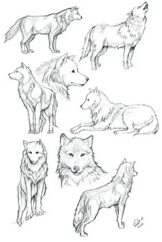 Wolves of Transylvania draw Wolf coloring … The post Wolves of Transylvania draw Wolf coloring … appeared first on Woman Casual - Drawing Ideas Tattoo Design Drawings, Art Drawings Sketches, Tattoo Designs, Drawings Of Wolves, Cool Wolf Drawings, Music Drawings, Drawing Poses, Painting & Drawing, Drawing Ideas