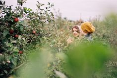 Apple picking with friends