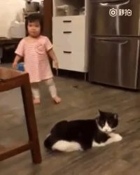Trendy Funny Animals For Kids Girls Ideas Funny Cat Fails, Funny Animal Memes, Cute Funny Animals, Funny Animal Pictures, Cute Baby Animals, Funny Cats, Cat Memes, Funny Monkeys, Dog Fails