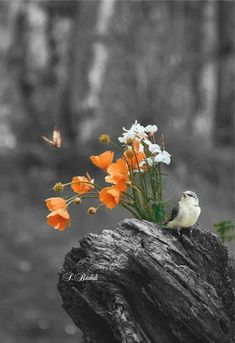 Ideas Plants Wallpaper Birds For 2019 Pretty Birds, Beautiful Birds, Beautiful Images, Pretty Flowers, Splash Photography, Nature Photography, Flowers Nature, Wild Flowers, Art Halloween