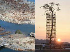 Um monumento foi construído em Rikuzentakata, para eternizar a última árvore sobrevivente das 70 mil destruídas ao longo da costa japonesa, após o tsunami. O imponente pinheiro de 88 metros sobreviveu por cerca de 18 meses após o tsunami, mas morreu devido aos altos níveis de solução salina introduzidas em seu ambiente. Depois de derrubada (...)