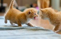 Kittens and Their Canine Babysitters - Love Meow