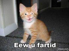 funny kitten face