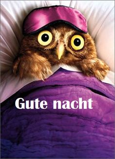 Counting Sheep Good Night owl good night sweet dreams good night gif good night quote good night friends and family good night animated counting sheep Animals And Pets, Funny Animals, Cute Animals, Merci Gif, Belated Birthday Card, Funny Birthday, Funny Owls, Owl Photos, Seriously Funny