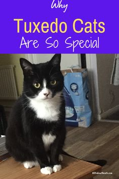What are tuxedo cats and what makes them so special? Discover  all about these unique felines and why they make such loving pets. #tuxedocats #catbreeds #blackandwhitecat #blackcatbreeds Crazy Cat Lady, Crazy Cats, Black Cat Breeds, Pretty Cats, Pretty Kitty, White Cats, Black Cats, Tuxedo Cats, All About Cats