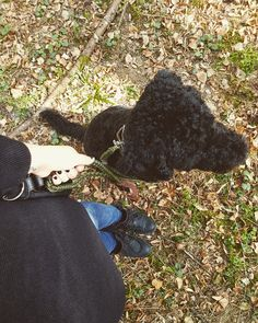 Die Leder Nuance dog Leash in Military Green von Molly&Stitch ist bei Dogaholics GmbH erhältlich. Dog Leash, Military Green, Crochet Necklace, Dogs, Fashion, Linen Fabric, Doggies, Crochet Collar, Moda