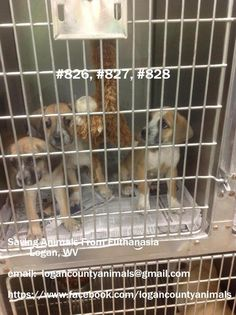 URGENT! These pups need someone to rescue or adopt them. Not much time for them. Please share!!