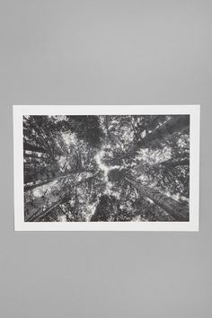Geoffrey Agrons For Society6 Trees Lounge Art Print - love the black and white simplicity to capture nature's beauty