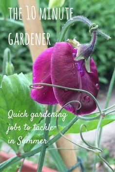 Only got 10 minutes to spare for gardening? Top garden and allotment jobs to tackle in Summer.