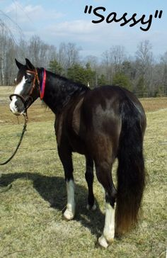 Meet Sassy!  She is a super flashy girl with all the color and comfort a person could need.