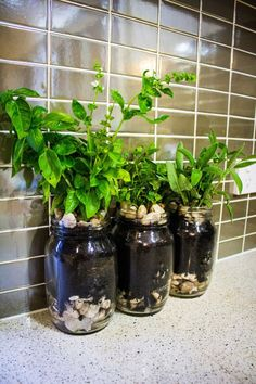 Grow herbs in mason jars and other small space (or no space) gardening ideas.
