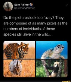 Do the pictures look too fuzzy? They are composed of as many pixels as the numbers of individuals of these species still alive in the Wild. Animals And Pets, Cute Animals, Save Our Earth, Faith In Humanity, Animal Rights, Worlds Of Fun, Change The World, Mind Blown, Popular Memes