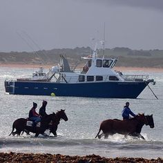 Breakwater #destinationwarrnambool #foreshore #love3280 #horses exercising by rhondamac5