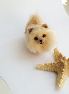 Needlefelted Pomeranian Dog Sculpture, Miniature collection Doll House Pet, Tiny animals, Wool felt small dog, beige pomeranian puppy