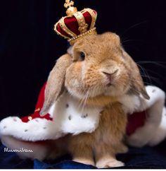 High King Bunny the 3rd