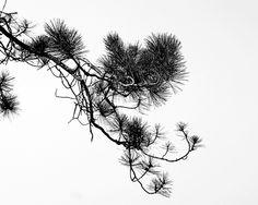 Branch by chefranden, via Flickr
