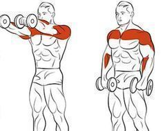 Bodybuilding, Tips for Muscle Mass Development #workout #fitness #health #bodybuilding #women #men  #training #exercise #gym