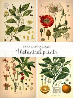 Forest Dreams: design Botanical pdf downloads