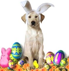 Easter dog - what our dogs are willing to do for us!