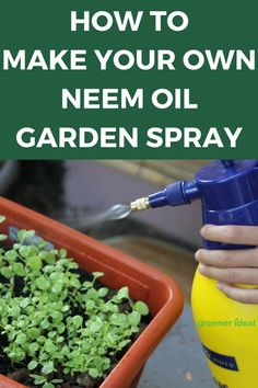 Want to know how to make your own homemade neem oil garden spray? Here's a great recipe to make your own organic neem oil pesticide and get rid of those garden pests. It is also non toxic to humans and pets!