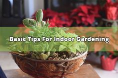 Indoor gardening, is as the name implies, growing a garden inside. They're usually grown in a small pocket garden or in containers. Plants actually don't naturally thrive indoors. A great deal of tips and advice needs to kept in mind when growing plants inside. Indoor Gardening Tip No. 1 : Let There... - #plants #indoor gardening #light #humidity #temperature #water